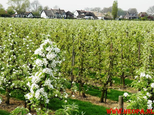 16-04-2011     Rode-Kruis   Bloesem   wandeltocht 26 Km (60)