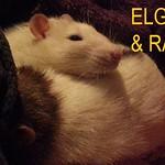 3rab & elgar