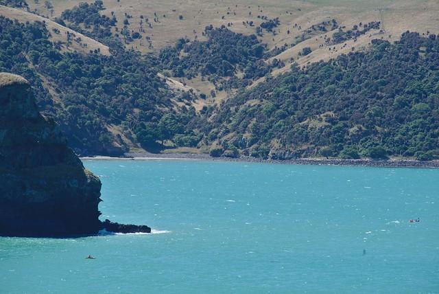 kayaking Banks Peninsula