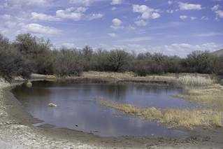 Water hole | by Trail Image