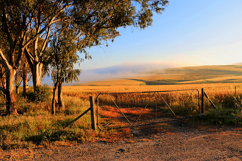 sunrise wheat westerncape contermanskloof