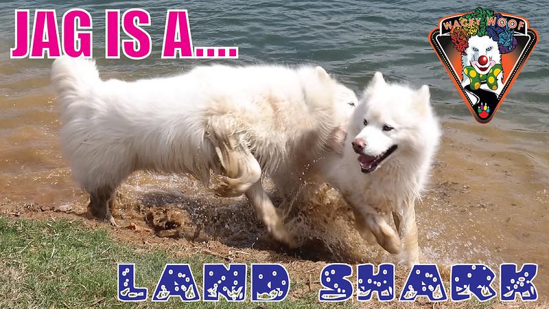 JAG Is A Land Shark