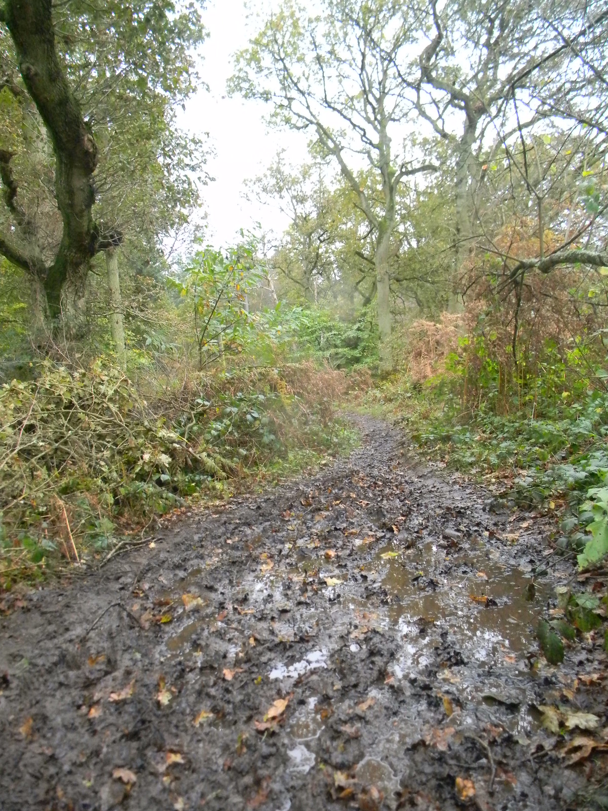 """""""might be muddy in places"""" Milford to Godalming"""