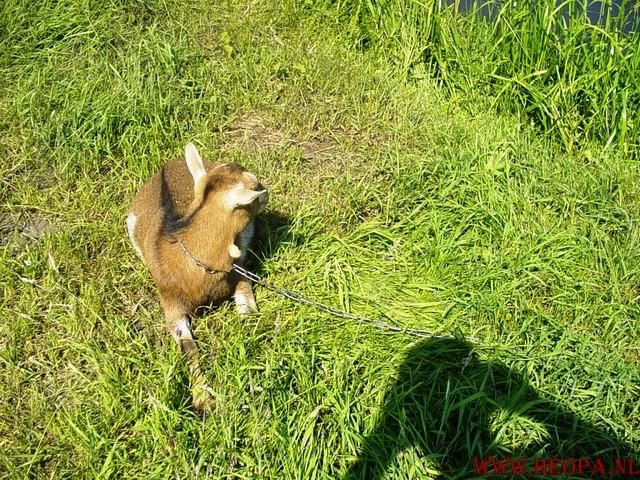 Oud Zuilen      16-06-2006                    40 Km (61)