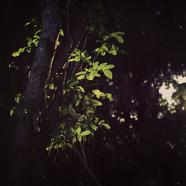 Spotlight Challenge (Ikoflex Ic)