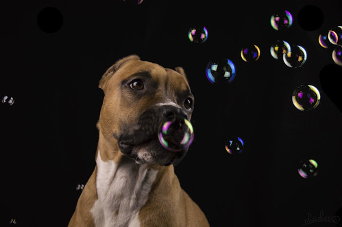 more bubbles   by kitti_tikasz