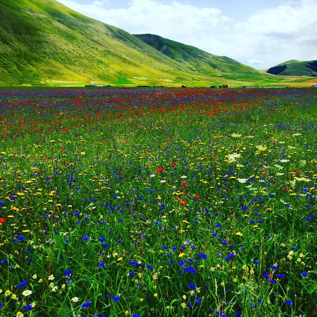 e44851fa778fd ... #fioritura2016#natural #beautiful #blue #cloudporn #clouds #day #flowers