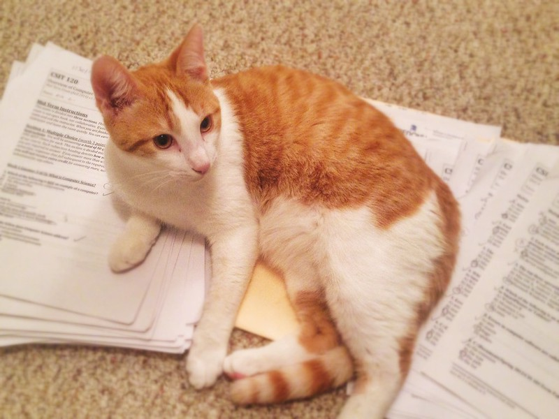 Worst Grading Assistant Ever