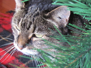 Gizmo under the Christmas Tree 2011
