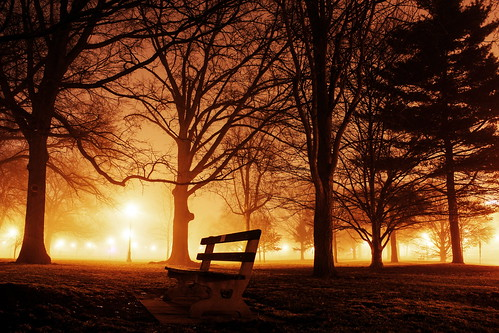 trees columbus ohio mist tree yellow misty night bench columbusohio elliot benches theohiostateuniversity oval yellowlights ohiostateuniversity theoval the yellowlight gilfix yellowmist elliotphotos elliotgilfix