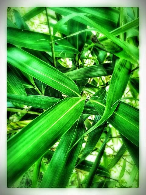 A fever. Green.