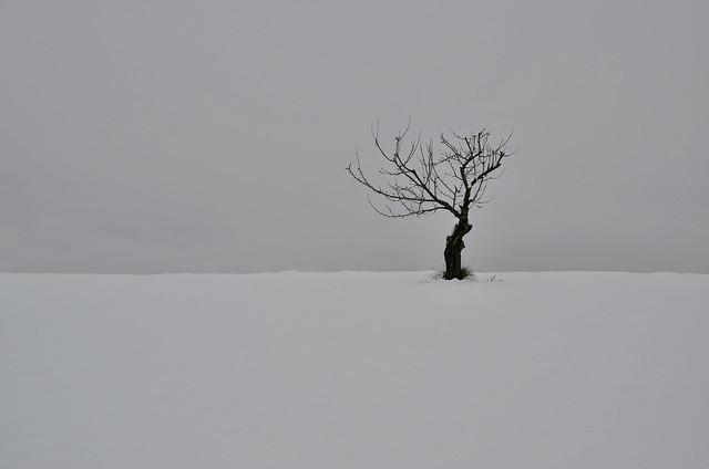un arbre isolé sur une crête entre neige et brouillard