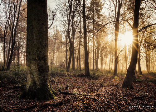wood morning trees england sun sunlight mist woodland woods unitedkingdom sony flare sunflare a77 ashampstead sonyalpha andyhough slta77 norcotwood andyhoughphotography