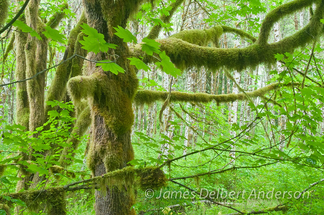 Baker River Forest