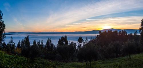 morning trees panorama cold fog sunrise hills blanket commute manhã montes nascerdosol nevoeiro manto fujifilms6500 ruinunes