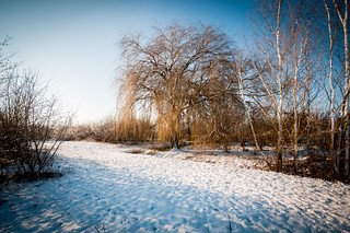 Snowy landscape in Hendrik Ido Ambacht (The Netherlands)