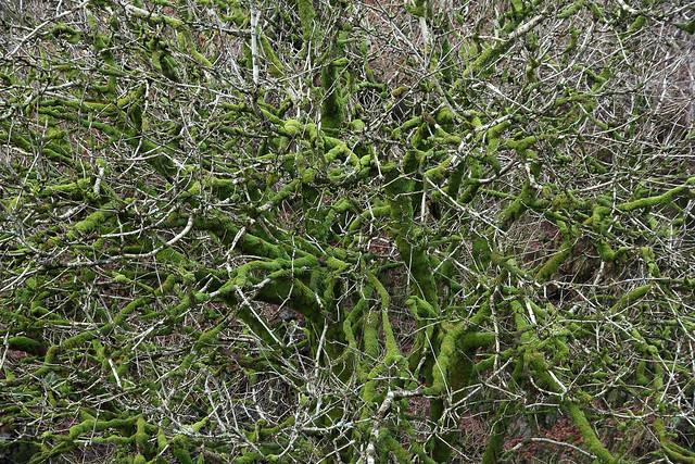 Treetop in Lummers Gill, Carlin Gill, Howgill Fells, Yorkshire Dales National Park near Sedbergh, Cumbria, UK