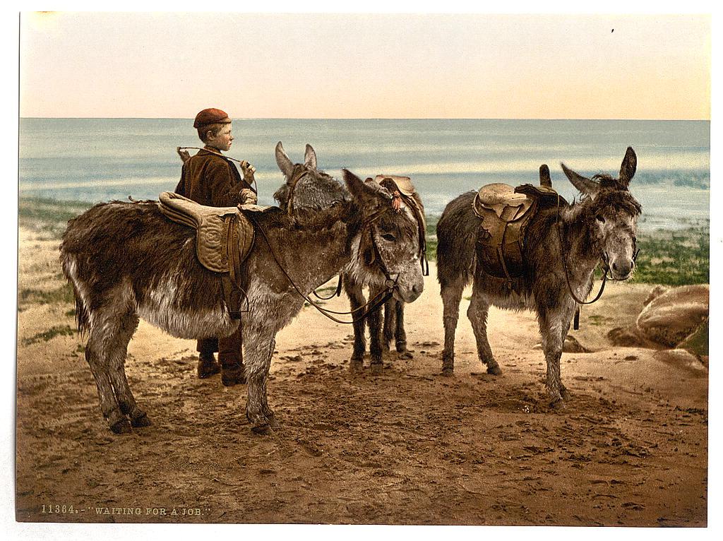 [Waiting for a job (donkeys), England] (LOC)