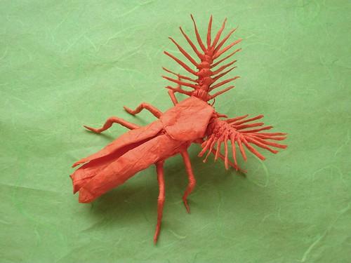 Phengodid Beetle | by OriGann