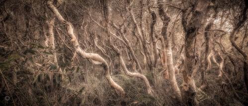 australia bark canon ferns forest grass landscape leaves leefilters melaleuca nature paperbark queensland sunshinecoast trees