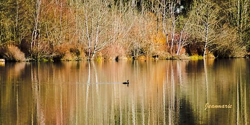 lake reflection nature water google nikon flickr cormorant wastate woodinville cottagelake inexplore jeanmarieshelton todaysflickrbestphotoaward