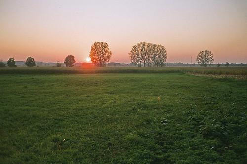 sunset tree film nature analog 35mm grain dream poland analogue plain rollei35 filmphotography brwinów believeinfilm