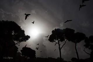 Birds | by Alessandro LS