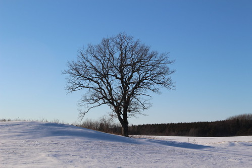 Day16_Lone Tree in Winter | by cal_day365