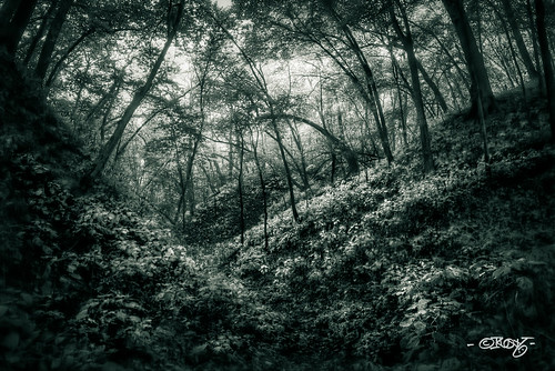 nebraska unitedstates omaha hdr hollow darkpath nealewoods