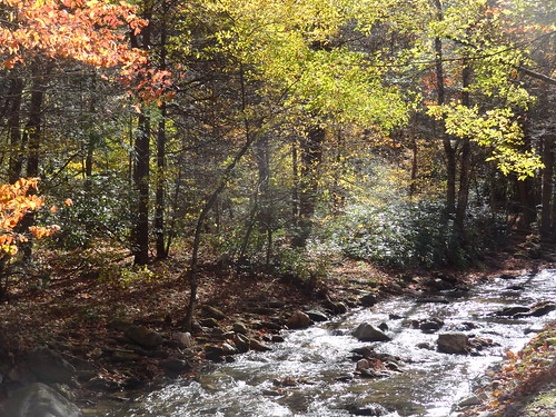 autumn trees sun sunlight color fall water forest rocks colorful stream shadows northcarolina flowing buckcreek