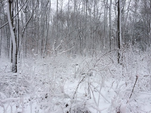winter white snow cold forest outside outdoors woods pa iphone 5s