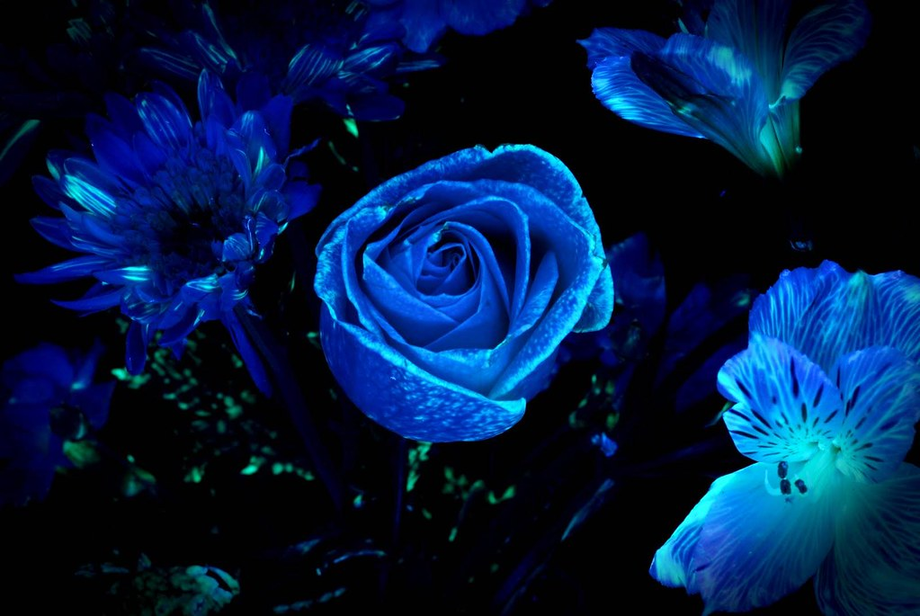 Dark Blue Flowers Tumblr Wallpaper High Quality Dark Blue
