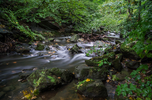 nature river flow cascade forest preserved conservation westchestercounty water