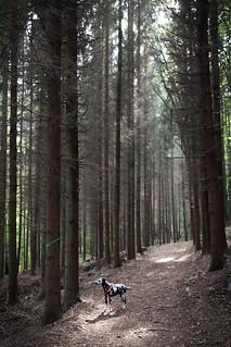 Fleckentier im Wald   by blumenbiene