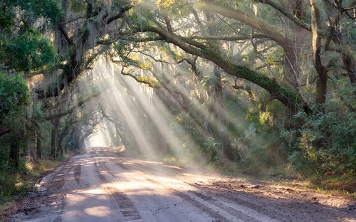 fog sunrise landscape woods glow forrest country southcarolina charleston southern dirtroad rays oaks botanybay countryroad sunbeams oaktrees edistoisland southeastern lowcountry carolinas edistobeach botanybayplantation plantationedistobeachsouthcarolina dirtroadoaktreesfogtreesraysunsavedroadsouthern
