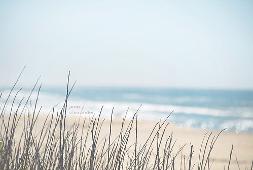 ocean california wood light summer moon seascape blur beach beauty cali reeds landscape photography bay blurry nikon warm waves pacific bokeh dunes softness warmth sunny pacificocean half solas d800 halfmoon roadlesstraveled solasphotography