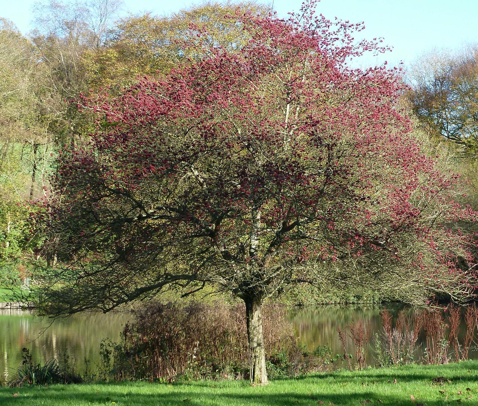 Autumn (Milford to Godalming)