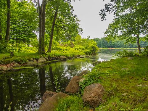 trees green water canon reflections newjersey spring rocks stream powershot springtime mahwah g12 darlingtonpark smack53