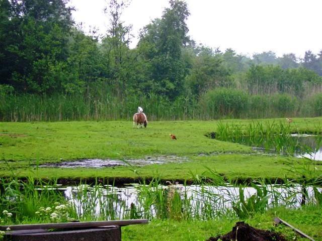 Oud Zuilen 20070609   40 km (27)