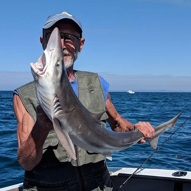 Open wide #amarisaweymouth #tope #fishingtrip #fishinguk #fishing