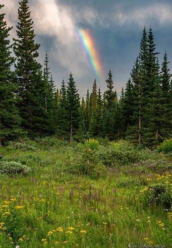 rainbow virga subalpinemeadow engelmannspruce flowers dyc daisies erigeron pedicularisgroenlandica sunset willows cablegatemeadow mountainresearchstation colorado niwotridge