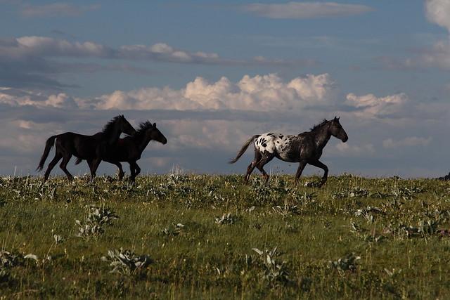 Montana - vicinity of Browning