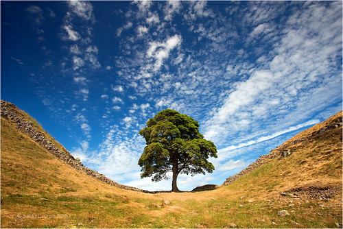sycamoregap northumberland hadrianswall tree landscape sky clouds nature outdoor sandralippross sycamore iconic england uk blue green wall steelrigg peelcrags