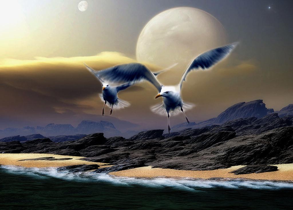 Wave tide, birds (Film)