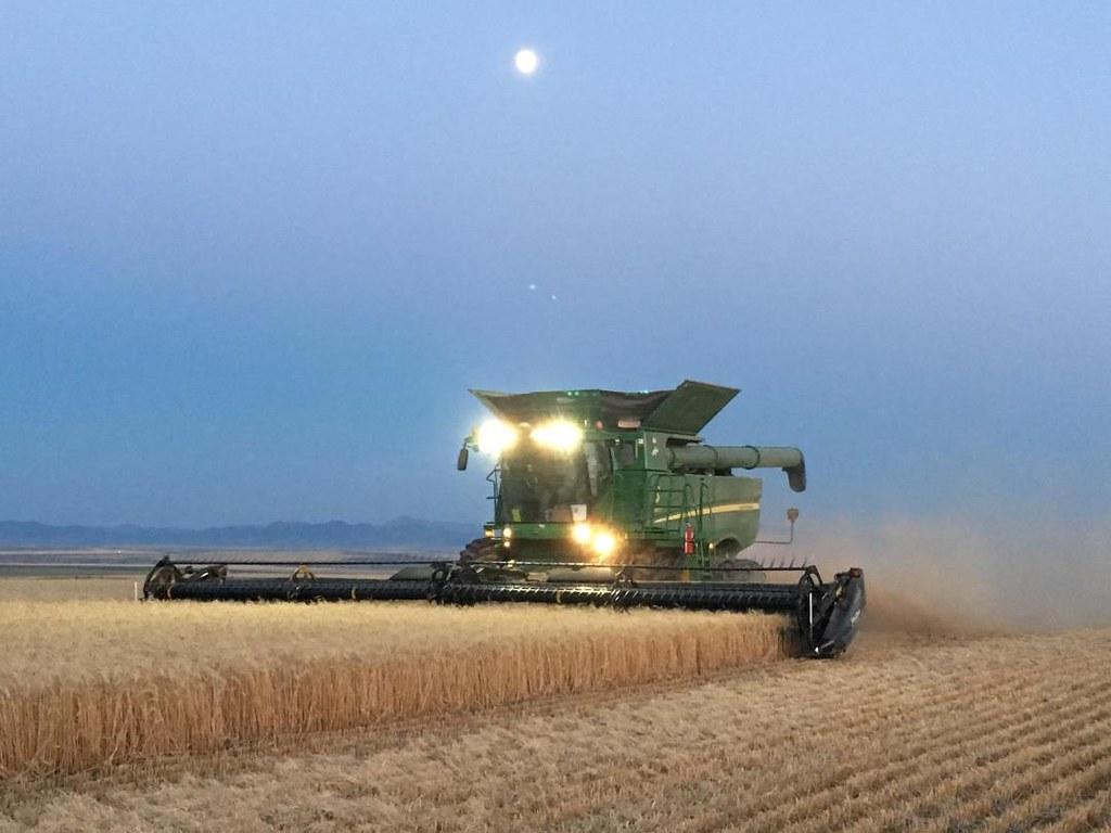 Schemper Harvesting 2018