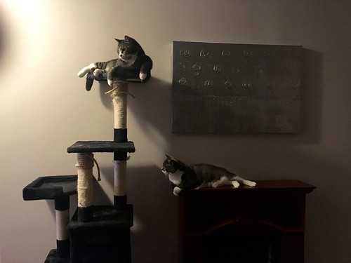 Watson won't let Crick onto the cat tree   by Beth77