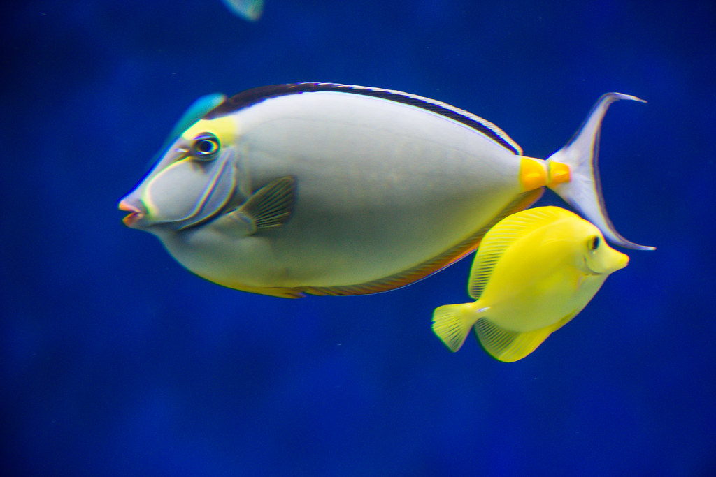Tropical Fish Susanne Nilsson Flickr