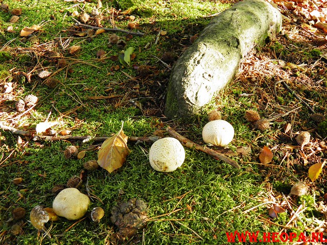 22-10-2011             Driebergen         26 km (76)