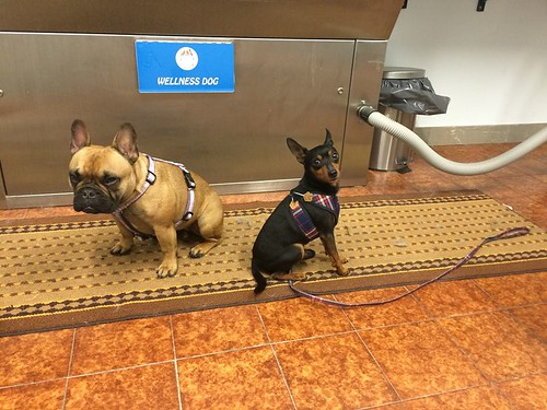 Violetta & Speedy   by wellnessdog