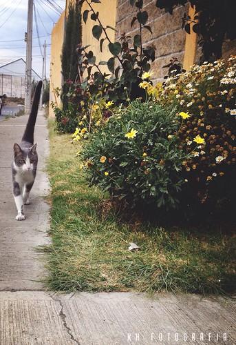 Creo que he visto un lindo gatito 🐈